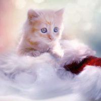 クリスマスに彼氏に会えないで寂しい!メールやプレゼントはしても良い?